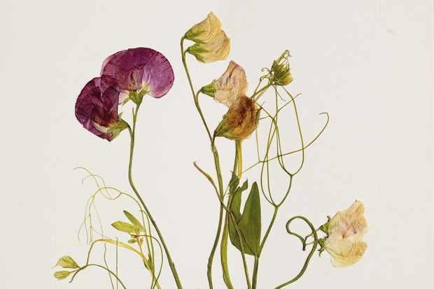 Pressed flowers from JamJar