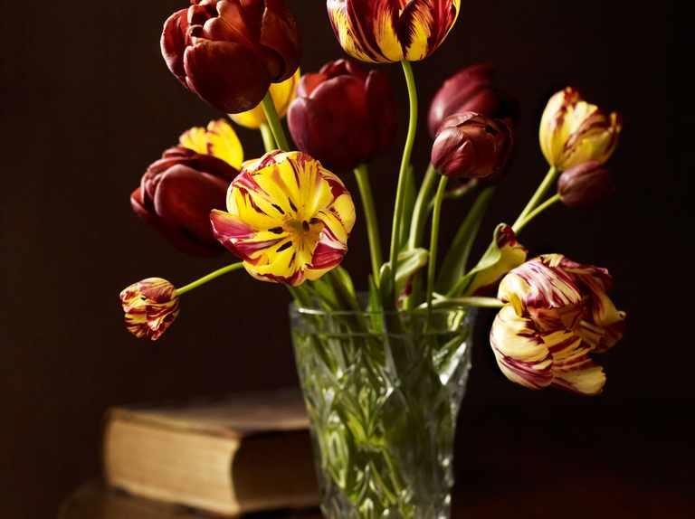 Rare tulips grown by Arne Maynard