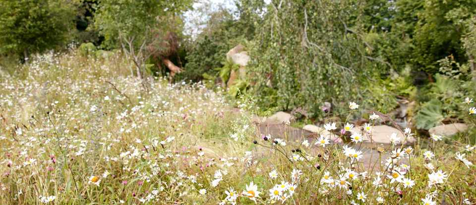 LONDON, UNITED KINGDOM - JULY 01: (EMBARGOED FOR PUBLICATION IN UK NEWSPAPERS UNTIL 24 HOURS AFTER CREATE DATE AND TIME) A general view of The RHS 'Back to Nature Garden' co-designed by Catherine, Duchess of Cambridge at the RHS Hampton Court Palace Garden Festival