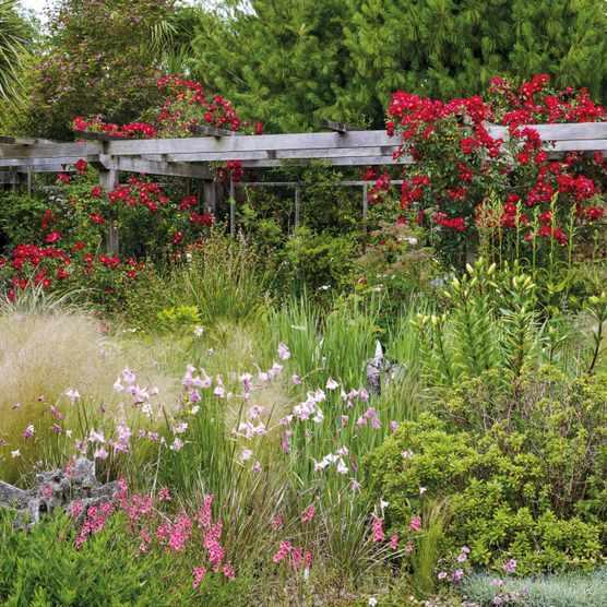 Wildside Nursery Garden