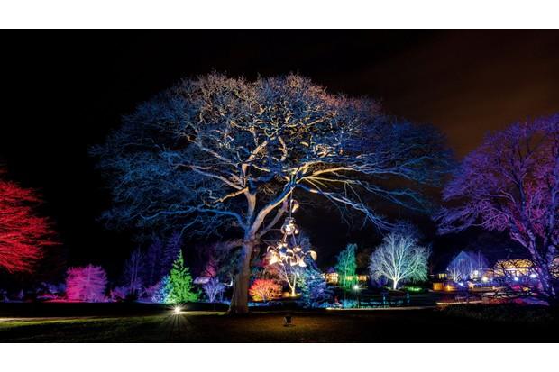 Glow illuminations at RHS Garden Harlow Carr