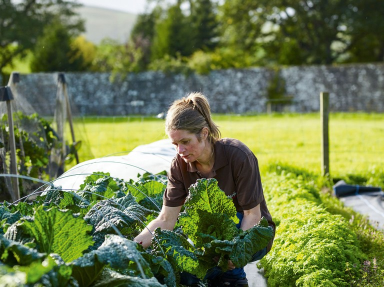 Kitchen garden grower Jo Campbell on working to Michelin-starred standards on Gleneagles Estate