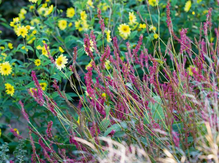 A prairie garden and how to plant one