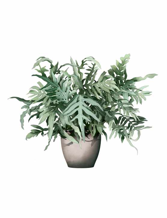 Phlebodium aureum or fern