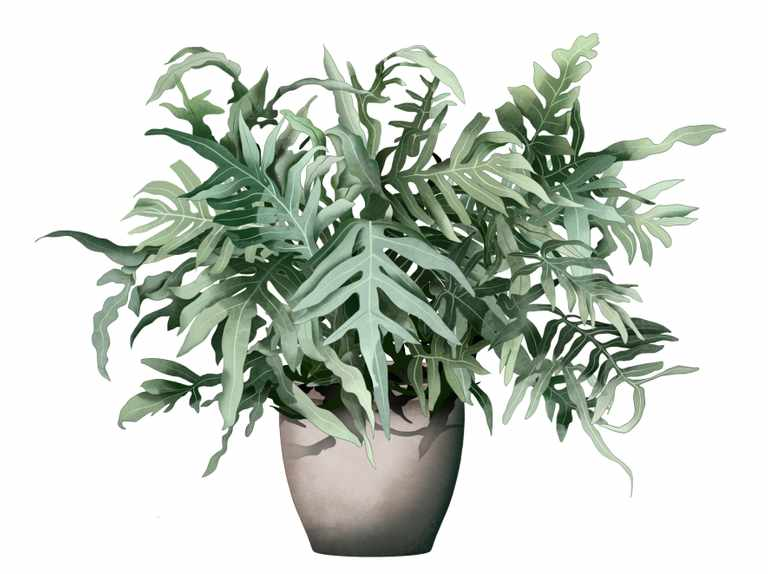 Houseplant ferns: how to look after Phlebodium aureum