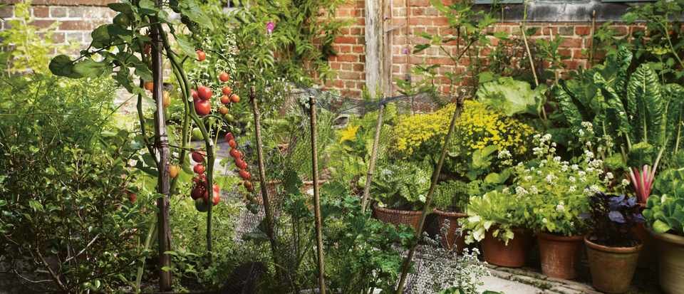 Nurseries and plant shops with mail order available