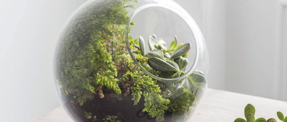 The Best Terrariums To Buy Gardens Illustrated