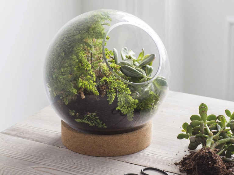 The best terrariums for home style