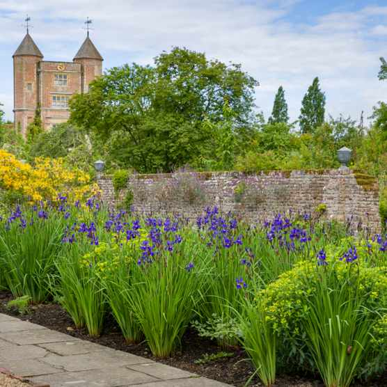 Irises at Sissinghurst Castle Garden, Kent
