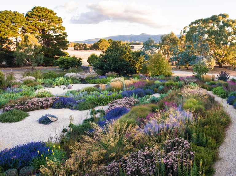 A perennial garden near Melbourne
