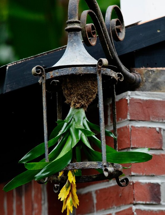 A light fitting, planted with a bromeliad