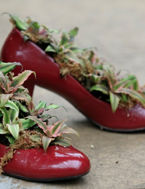 A pair of red ladies shoes planted with Earth Star Bromeliad