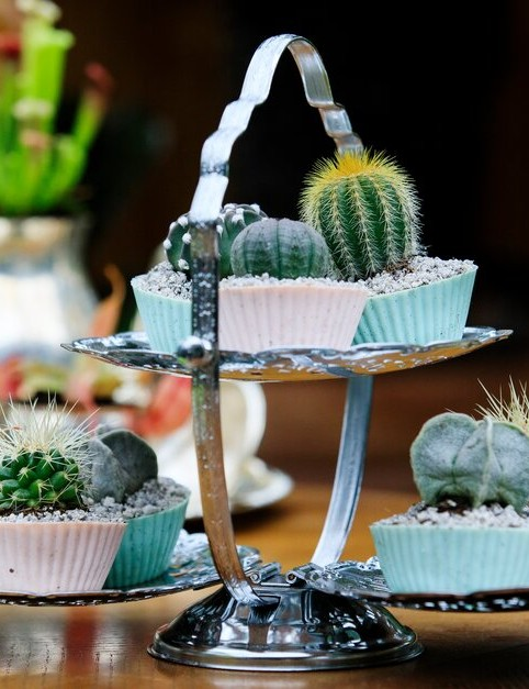 A cake stand of cactus cup-cakes stands