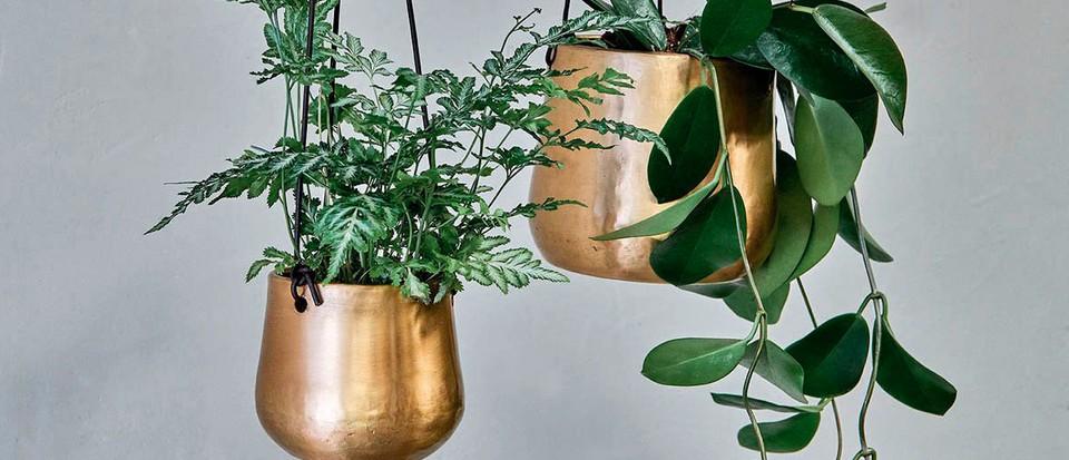 Best indoor pots to buy