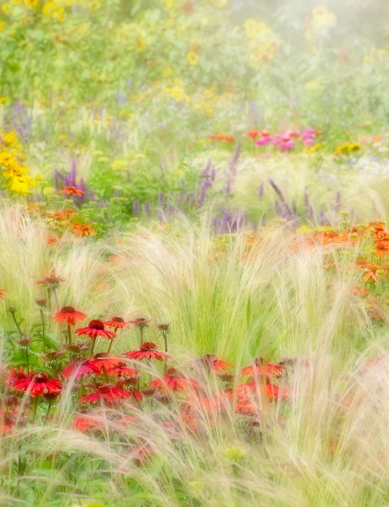 Jacky Parker winner of the International Garden Photographer Beautiful Garden category
