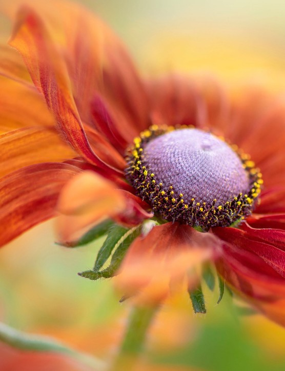 Jacky Parker, winner of the International Garden Photographer The Beauty of Plants category
