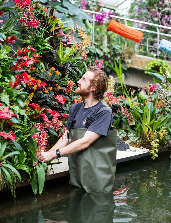 The orchid festival 2020 at Kew Gardens