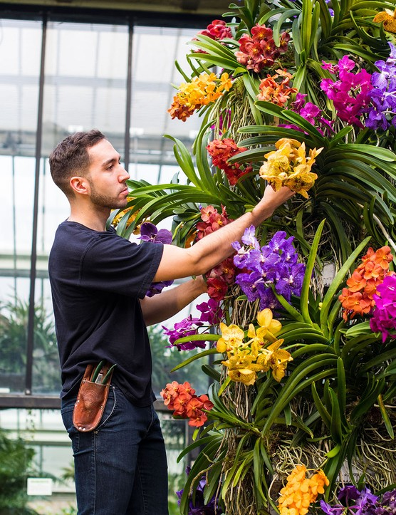 The orchid festival at Kew Gardens