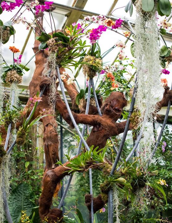 Orangutans at Kew Orchid Festival 2020