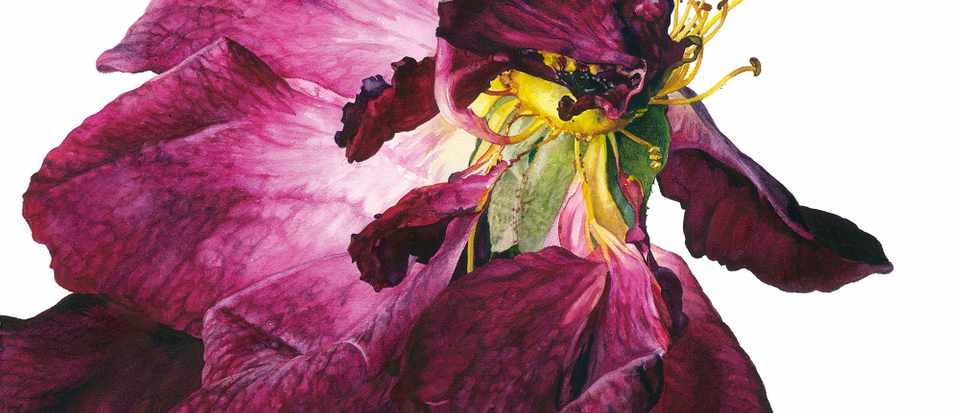 Roses in art: an enduring source of inspiration for Rosie Sanders