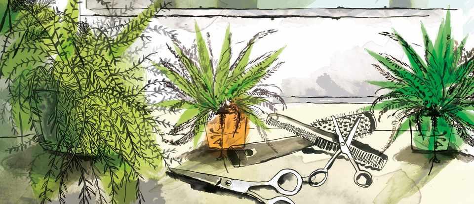 Asparagus fern: great house plant companions