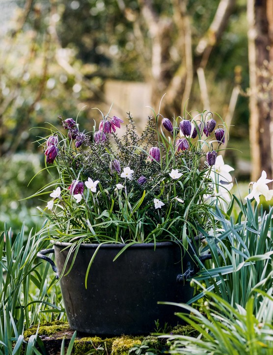 Plant container display with fritillaries