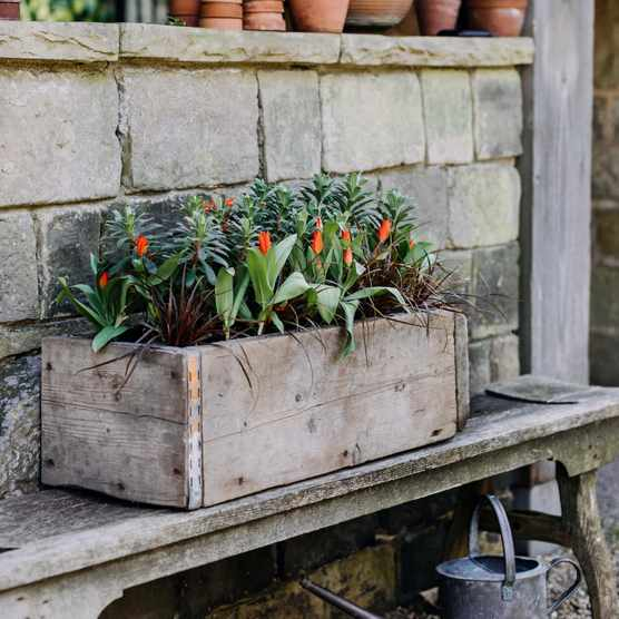 Container display from Ben Preston with tulips and euphorbia