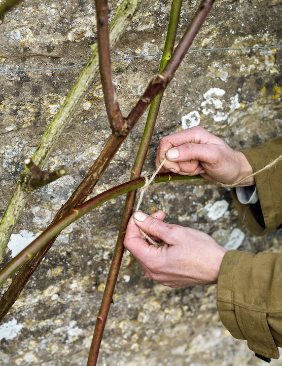 Jenny Barnes tieing in rose stems