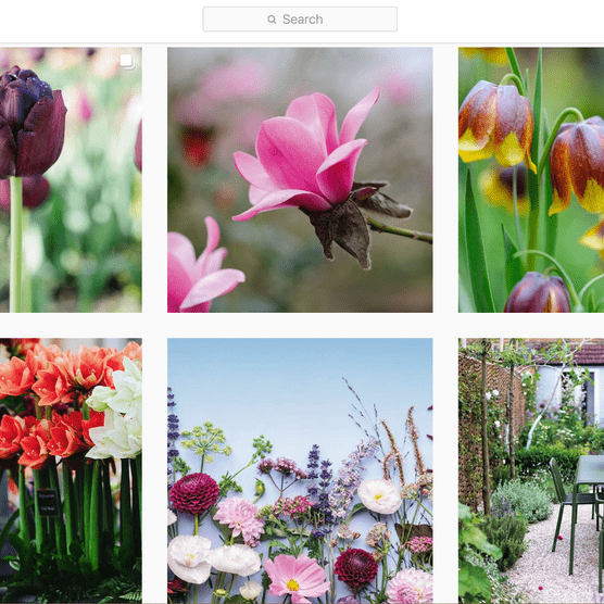 Gardens Illustrated's Instagram channel