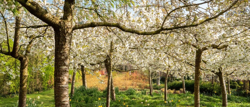 Selection of NGS gardens are reopening following lockdown