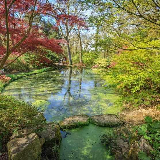 Bottom pond Exbury Gardens