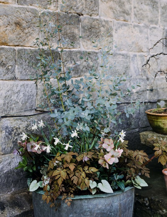 Pastel container flower display