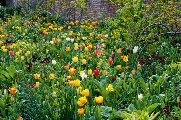 Forde Abbey's tulip display