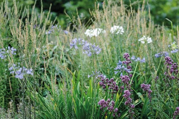 Duncan Nuttall designed garden in Devon