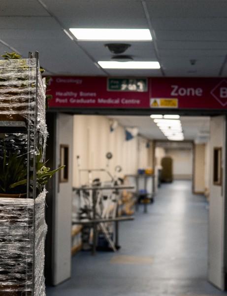 Plants in hospital