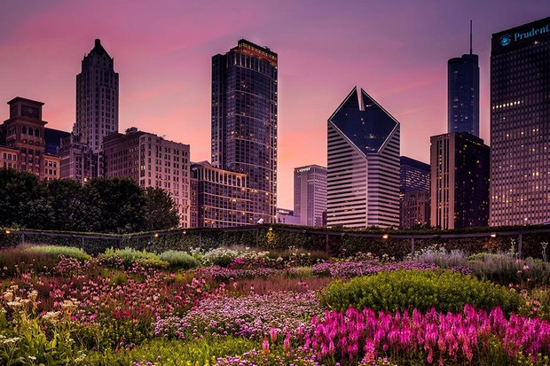 RHS Photographic Competition 2020, Urban Gardening, 1st place and Overall adult winner, Chicago Prairie