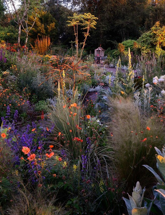 RHS Photoographic Competition 2020, Celebrating Gardens, 3rd place, A new dawn, Hunting Brook Gardens