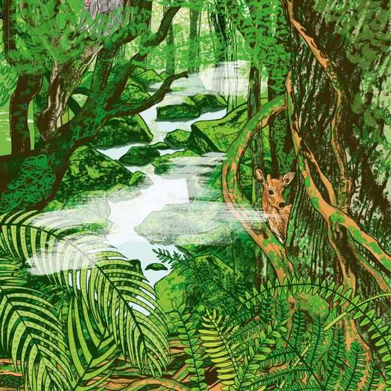 Alice Pattullo's illustration of Japan island Yakushima