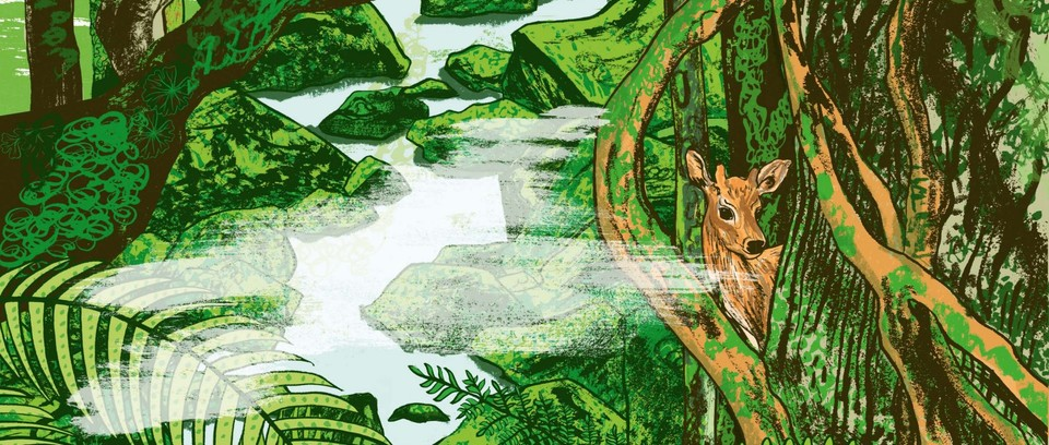 Alice Pattullo's illustration of Japan island Yakushima