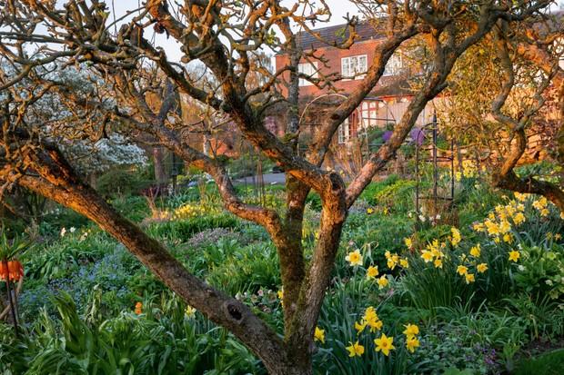 The Beeches, plantsperson's garden
