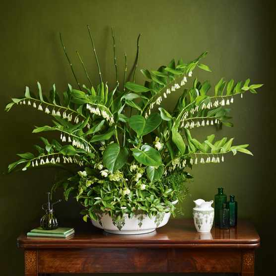 Pot-et-fleur with Jacky Mills: an aspidistra display