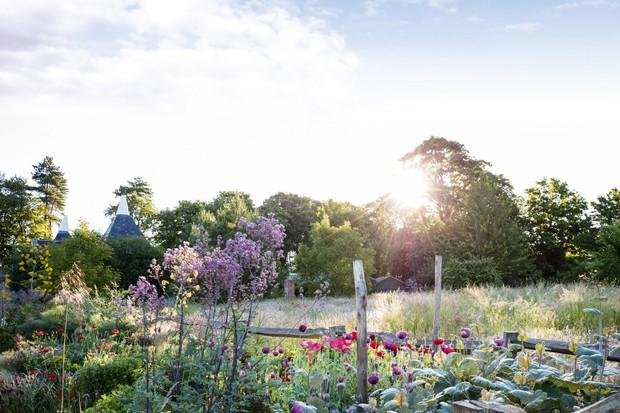Andy Salter's plantsman's garden