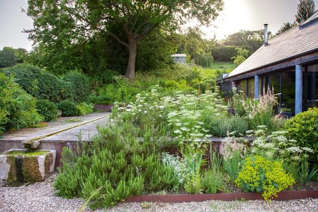 Umbellifers growing in Alison Jenkins' garden