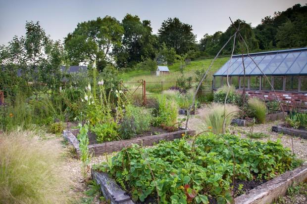 Alison Jenkins' productive garden