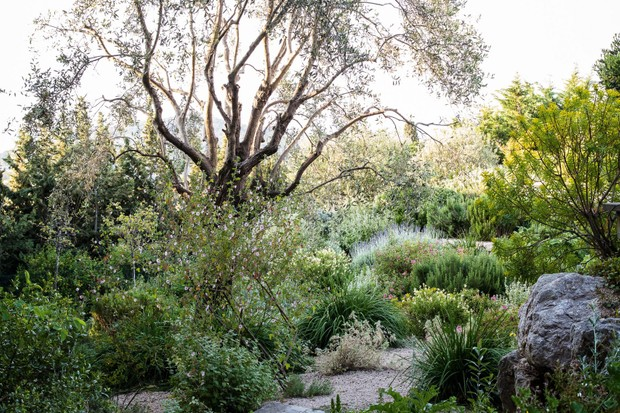 James Basson's garden on the French Riviera