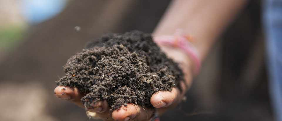 Best compost for potting and more