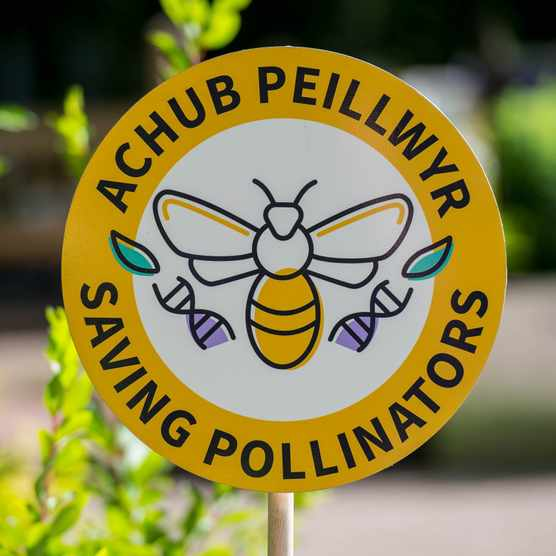 The Saving Pollinators Assurance Scheme in Wales