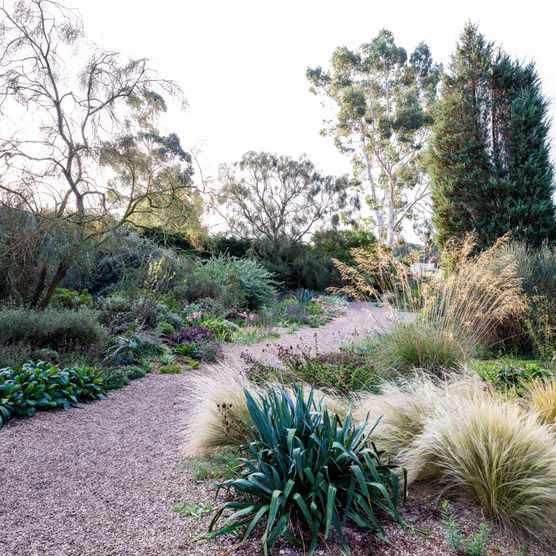 Gravel garden at Beth Chatto's garden
