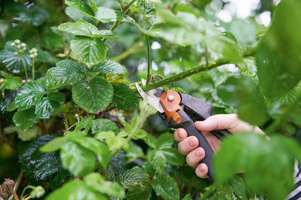 Artist Alice Fox harvesting bramble stems