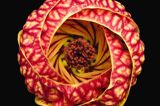 Bruno Militelli, 'Vortex Blossom', finalist